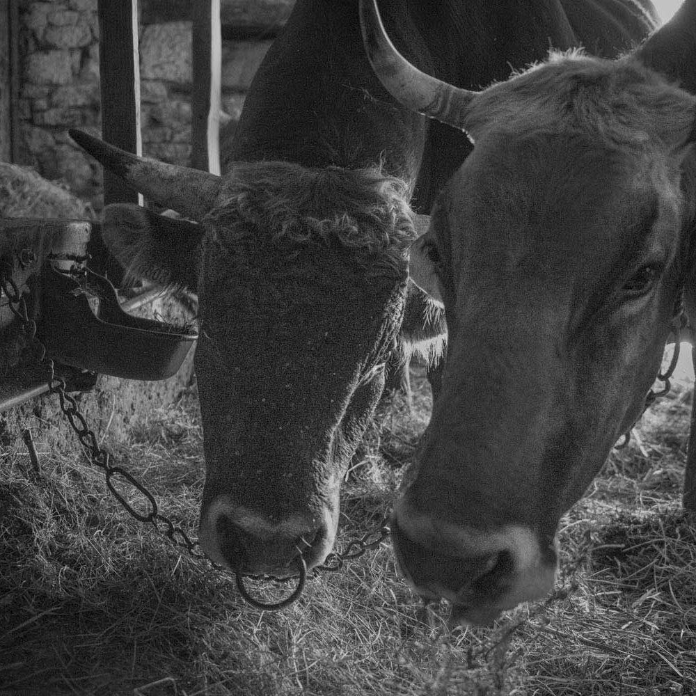 creation-site-internet-2-vaches-rouges