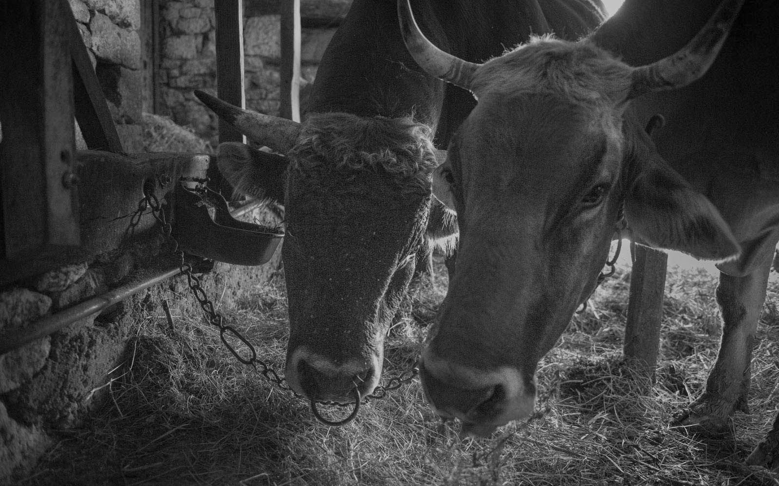 Création de brochure / Création de site internet : Les 2 vaches rouges